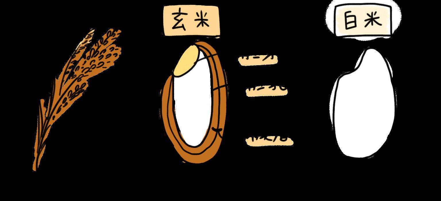 玄米と白米の違い