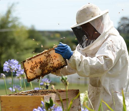 養蜂場で作業中の宇田さん