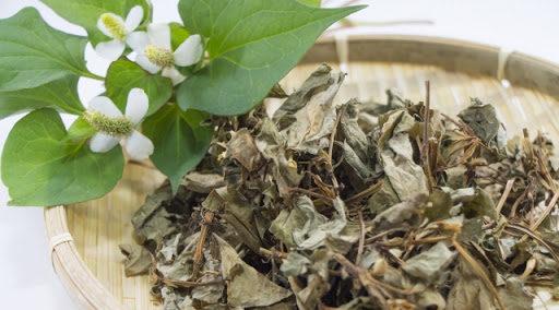 どくだみ茶の1日の摂取量と副作用